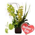 Orquídeas para Mamá, Aguascalientes