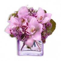 Premium Orchid Cube, Miami