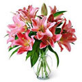 Beautiful Lilies, Los Angeles-Bio Bio