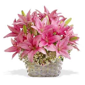 Flores A Guayaquil Ecuador Florerias Guayaquil Envios