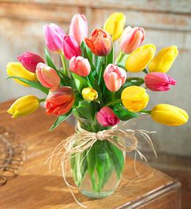 Tulipanes Para Tí