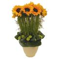 The Sunny Bouquet, Ecuador