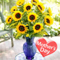 Cálido Amor para Mamá, -Guatemala