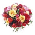 Rainbow Premium Roses, Tijuana-Baja California