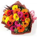 Assorted Gerberas OFERTA, Acapulco Diamante