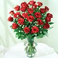 Rosas Soñadas, Esteli