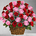 The Big Love Bouquet, Uruguay