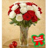 Christmas Roses, Usa