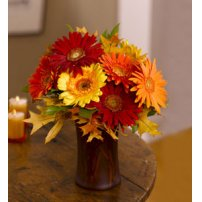 Gerberas Primaverales, Watertown
