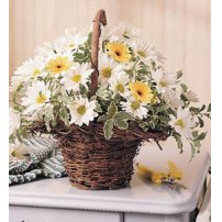Daisy Basket, Usa