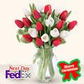 Christmas Tulips OFERTA!, Usa