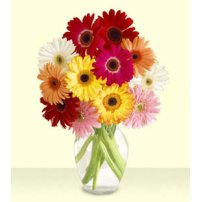 Fresh Gerberas Arrangement, New York