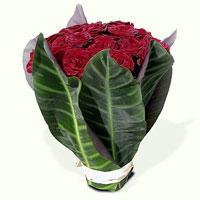 Spanish Roses, España